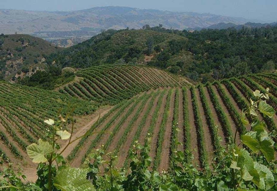 Calera Vineyard